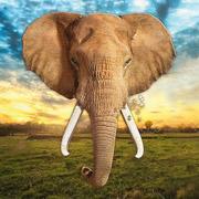 Madd Capp, Puzzle I AM - ELEPHANT - Słoń