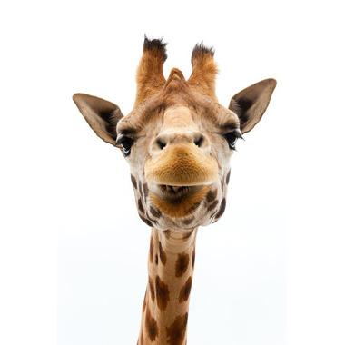 Dekornik, naklejka Żyrafa kolor