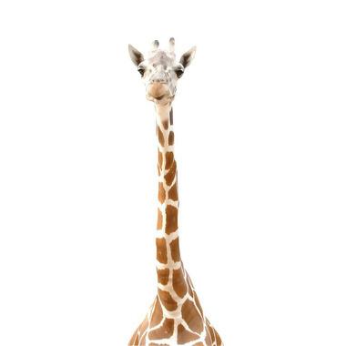 Dekornik, naklejka Żyrafa