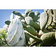 TROPICAL pieluszka bambusowa kaktusy
